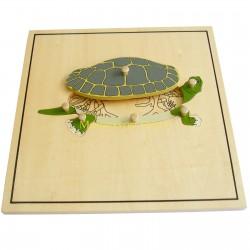 Puzzle - Szkielet żółwia
