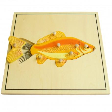 Puzzle - Szkielet ryby