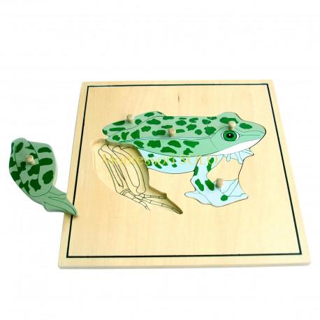 Puzzle - Szkielet żaby