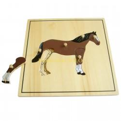 Puzzle - Szkielet konia